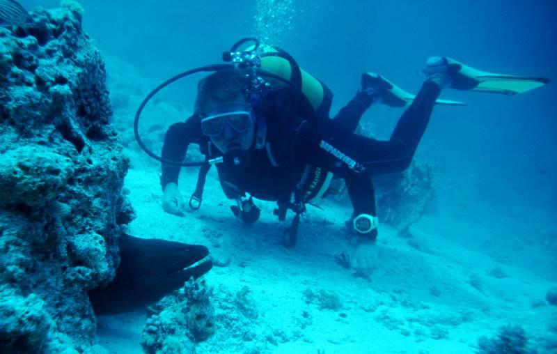 Tauchsicherheit, Tauchsignalgeber,,Riesiege Müränen im Roten Meer - keine Seltenheit