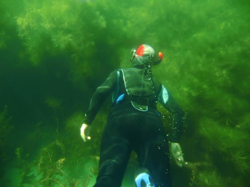 Freitauchen in einheimischen Gewässern - nicht ganz ohne...