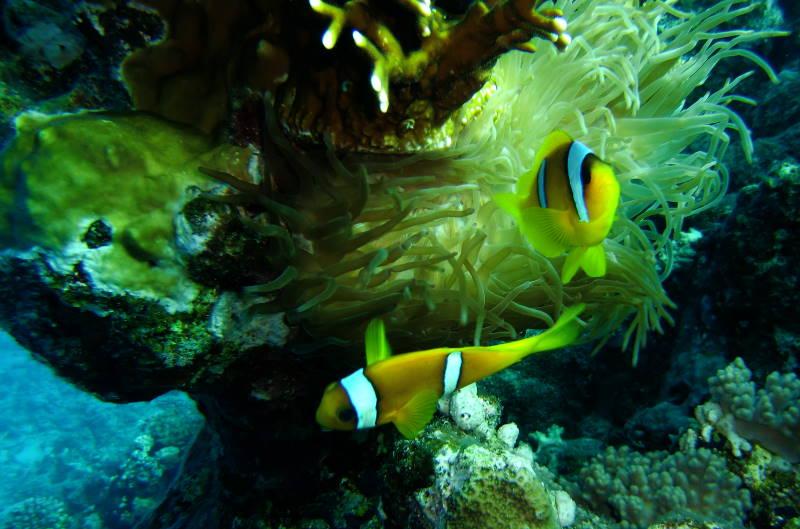 Tauchen Signalgeber Unterwasser Fotografie