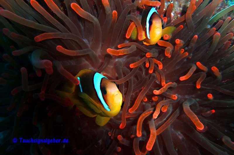 Unterwasserblitzgerät Tauchboje